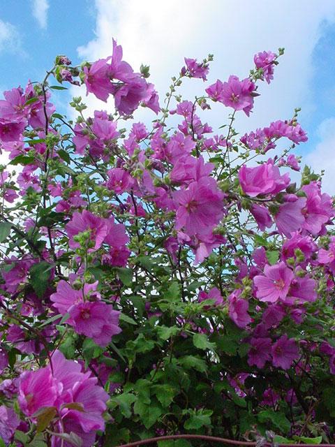 Plants In My Basingstoke Garden